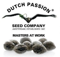 dutch_passion